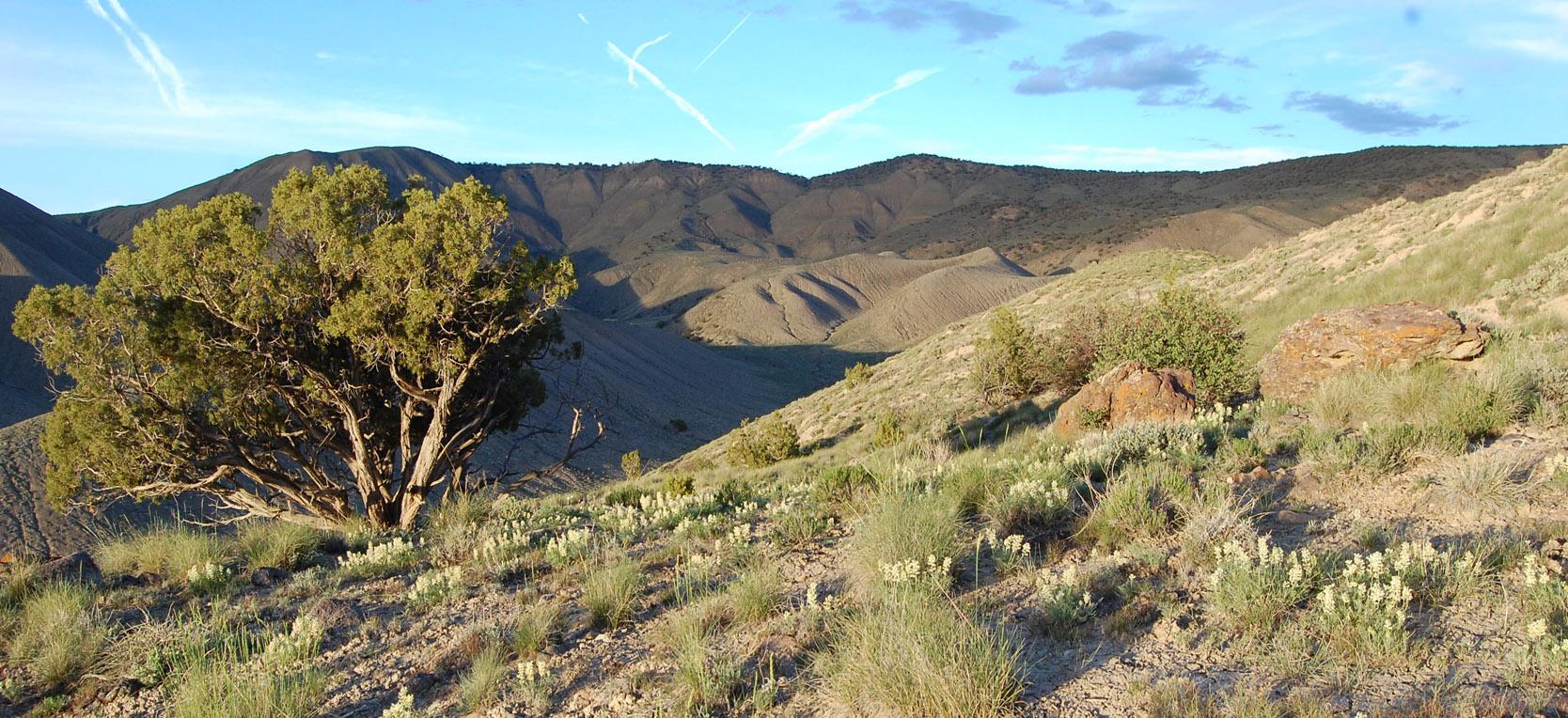 adobe hills