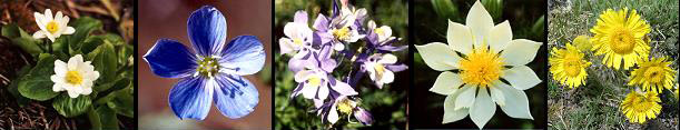 flower collage_smaller